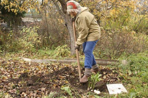 Огородные работы в ноябре